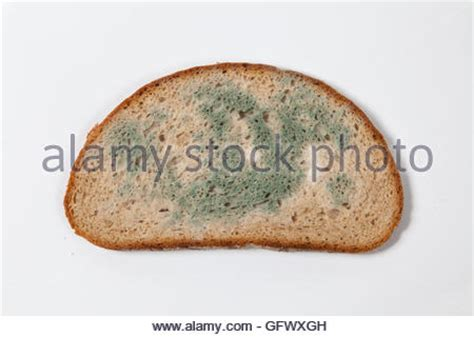 moldy bread stock photo royalty free image 92178187 alamy