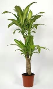les plantes d int 233 rieur mode d emploi