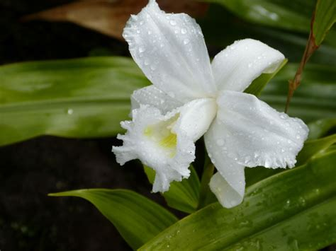 amazon rainforest orchids www pixshark com images amazon rainforest orchids www pixshark com images