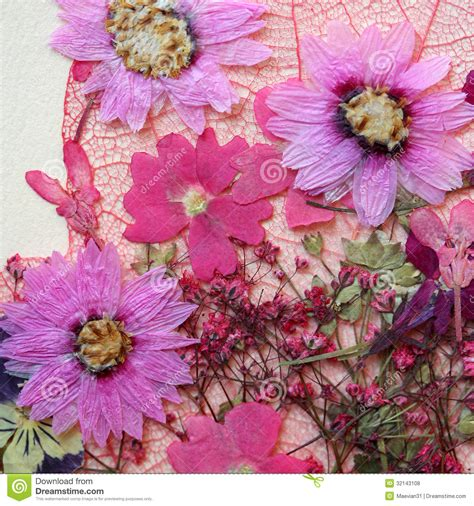 Pressed Flowers Arrangement Royalty Free Stock Photos