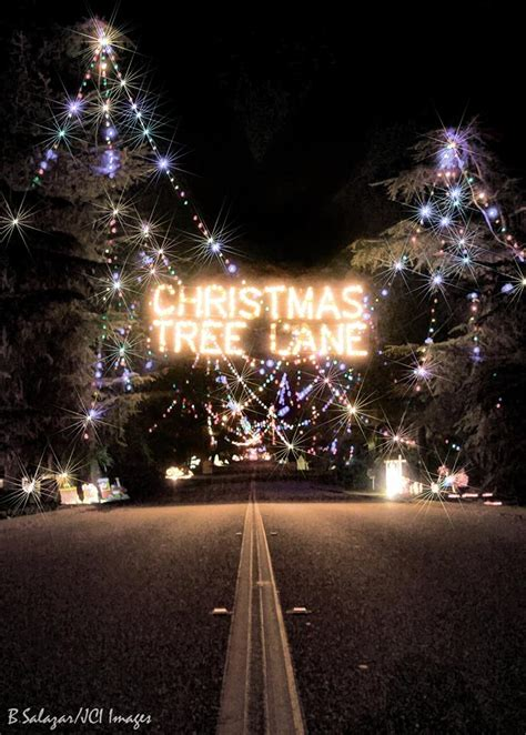 christmas tree lane fresno ca schedule archives boise
