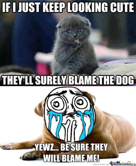 Too Cute Meme Face - too cute cat is too cute by alex19xd meme center