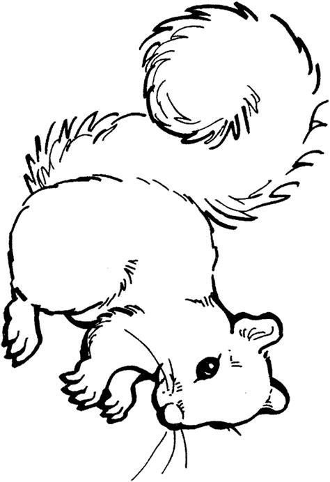 squirrel template coloring home