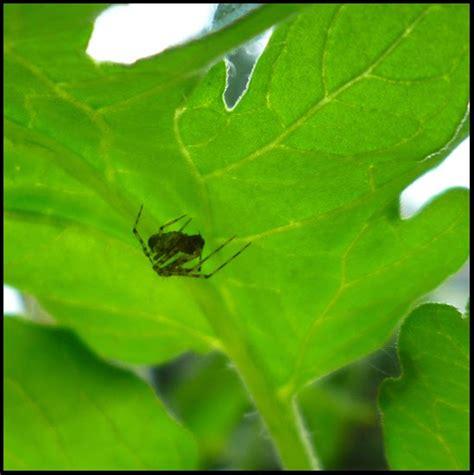 Garden Spider Benefits Patio Of Pots Benefits Of Spiders In The Garden