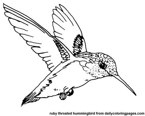 coloring pages with hummingbirds printable color picture hummingbird texas ruby throated
