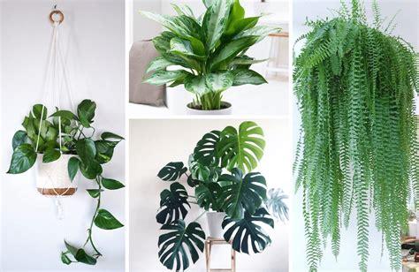 indoor plants  clean air   light