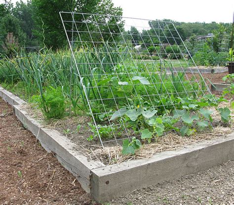 Garden Arch Netting Cucumber Trellis Flickr Photo