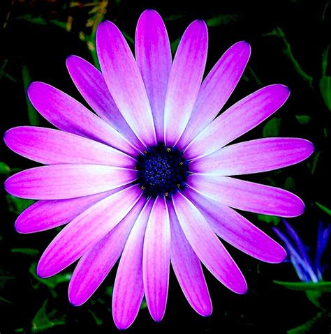 Gamis Purple Flower 1 purple flower a photo on flickriver