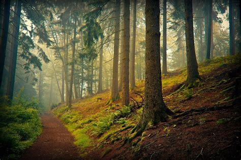 imagenes de paisajes windows 24 fotograf 237 as de paisajes naturales del bosque 193 rboles