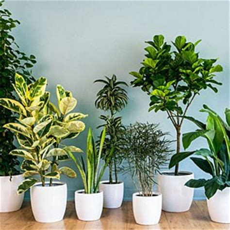 plants in home low light plants for your sun deprived home sulekha home