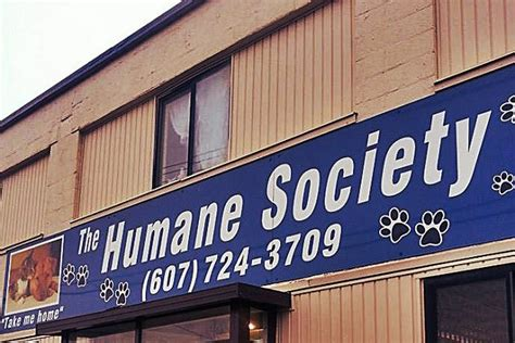 broome county shelter broome county humane society pleads for help with puppies
