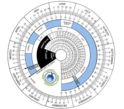 understanding  due date  dynamic pregnancy wheel