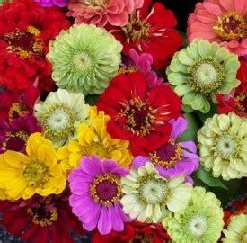 il significato dei fiori libro fiori dalla a alla z photogallery il significato e la