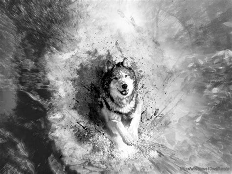 10 best wolf makeup images on pinterest artistic make up black and white art white wolf pictures to pin on
