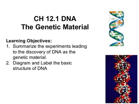 dna and rna section 12 1 12 1 notes dna the genetic material