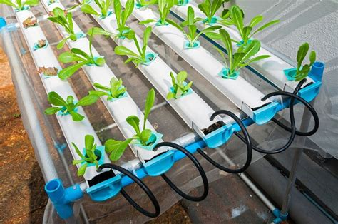 The How To of Organic Hydroponics