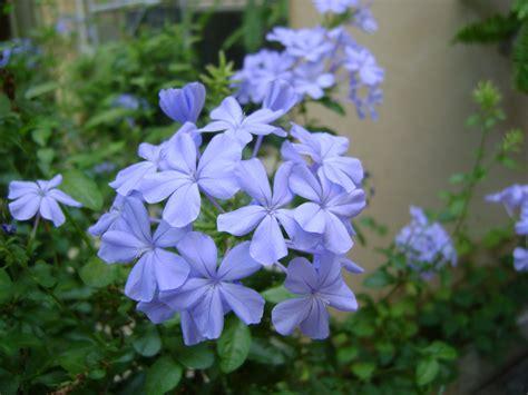 blue plants names www pixshark com images galleries with a bite