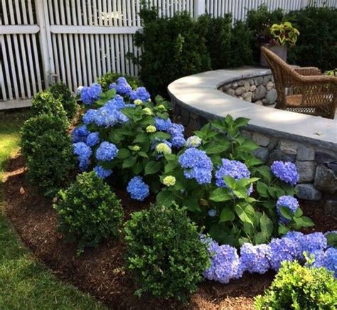 boxwood landscaping 25 best ideas about boxwood landscaping on