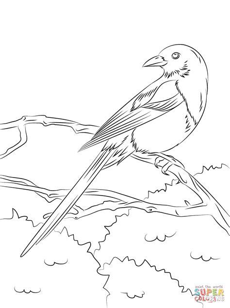 magpie bird coloring page european magpie coloring page free printable coloring pages