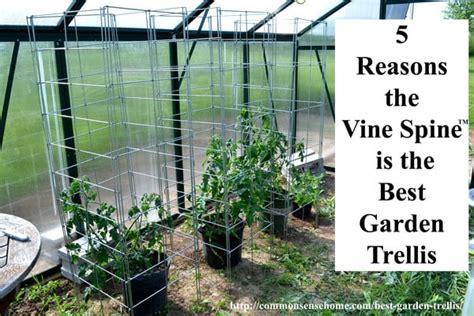 5 reasons the vine spine is the best garden trellis
