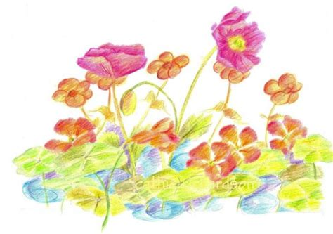 flower garden drawings flower garden drawing decorating clear