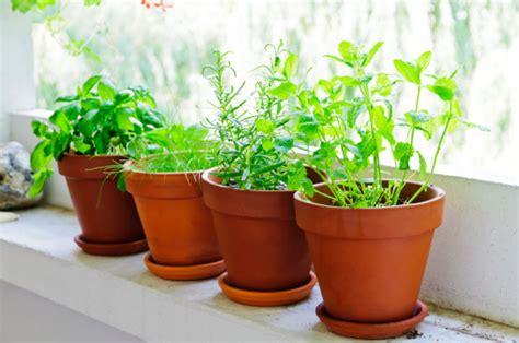 vasi per erbe aromatiche come creare un vaso pensile di erbe aromatiche pollicegreen