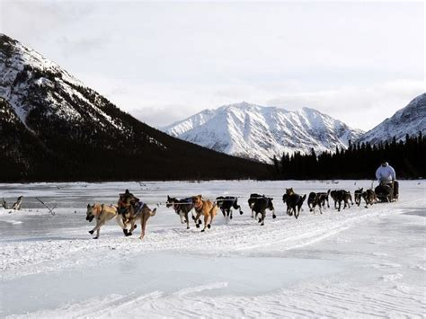 race in alaska iditarod trail sled race takes in alaska