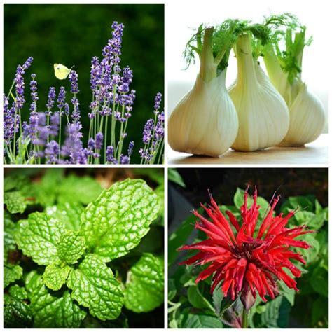 list  perennial herbs       cooking
