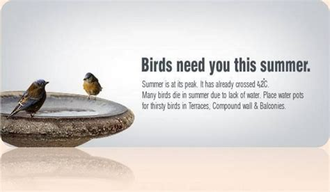 summer started please protect birds and stray animals