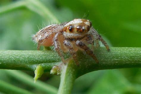 Garden Spider Definition Spider Definition What Is
