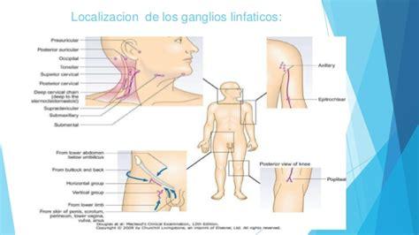imagenes ganglios ingle 191 qu 233 significa un ganglio inflamado