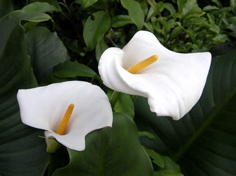 beautiful flowers   world trawel india