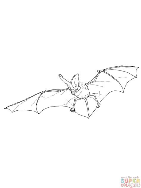 black bat coloring page free coloring pages of black bat