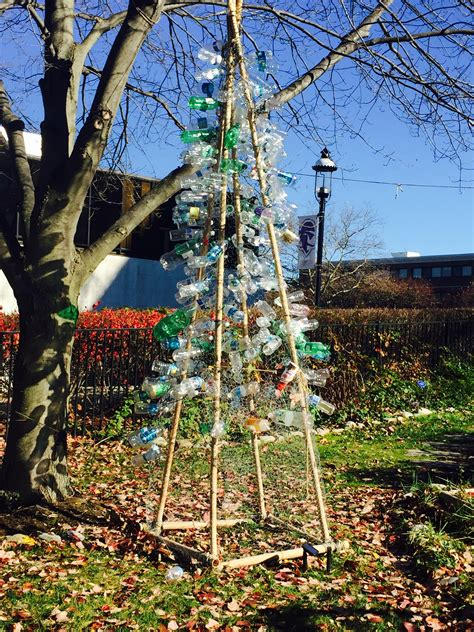 ecological christmas trees ecology club introduces annual eco tree tree project to seton community news
