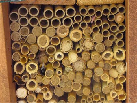 wildbienenhotel bauen anleitung wildbienenhotel nistplatz f 252 r wildbienen selber bauen