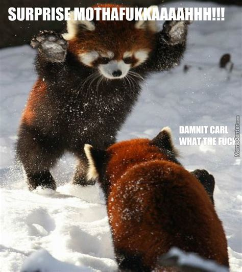 Red Panda Meme - red panda memes red panda specialty snow sneak attack
