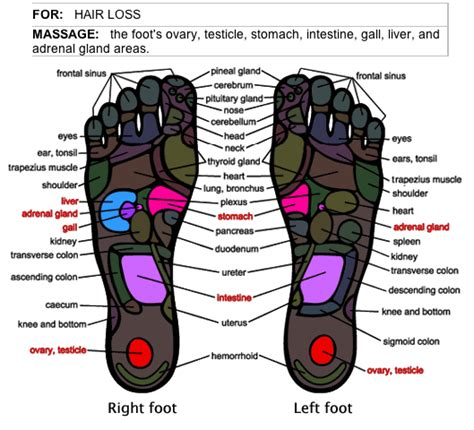 pressure points hair growth acupressure points chart for hair growth hand