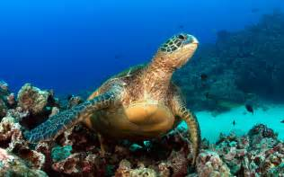 Thanksgiving In Hawaii A Hawaii Snorkel To Save Maui S Reefs Travel Leisure