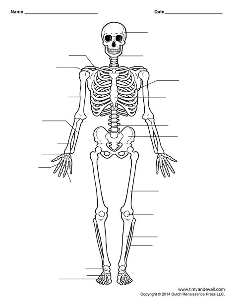 Human Worksheets For Free by Free Printable Human Skeleton Worksheet For Students And