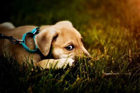 can dogs get constipated can dogs get constipated canna pet 174