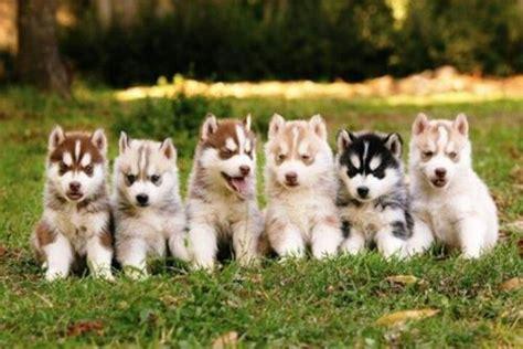 rainbow puppies rainbow colored puppies baby animals