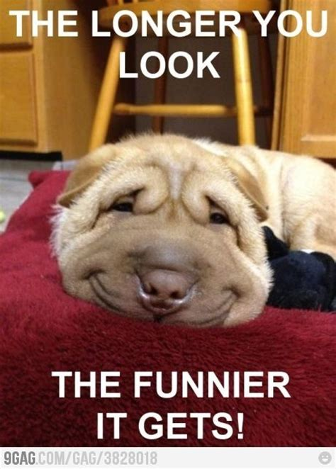 Smiling Dog Meme - best 25 funny dog pictures ideas on pinterest smiling