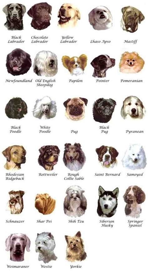breeds list with pictures medium breeds breeders guide