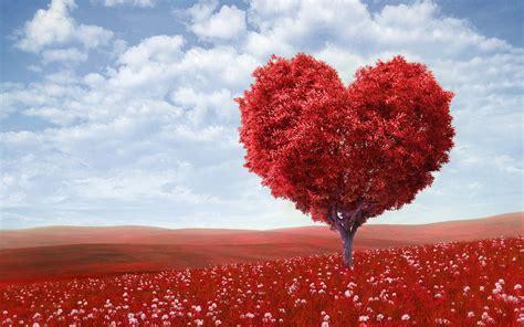 red tree love natural wallpaper hd desktop mobile