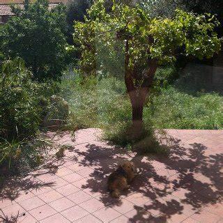 Il Sole Nel Giardino by Lilly Piccolina Finalmente A Casa