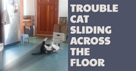 Across The Floor by Trouble Cat Sliding Across The Floor