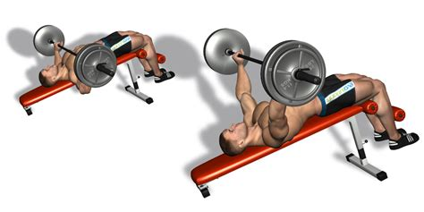 decline bench press bodybuilding how to build the perfect pectorals all bodybuilding com