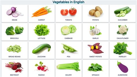 a vegetables list vegetables list www imgkid the image kid has it