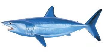 mako shark painting by carey chen