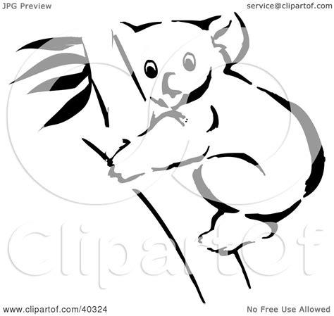 eucalyptus coloring page eucalyptus tree coloring page coloring pages